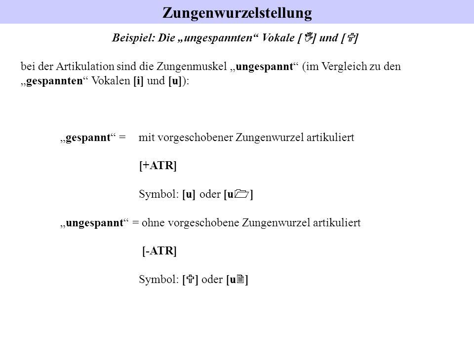 """Zungenwurzelstellung Beispiel: Die """"ungespannten Vokale [I] und [U]"""
